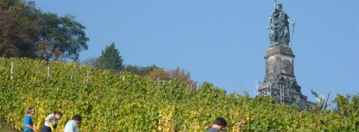 Weinlese am Niederwalddenkmal